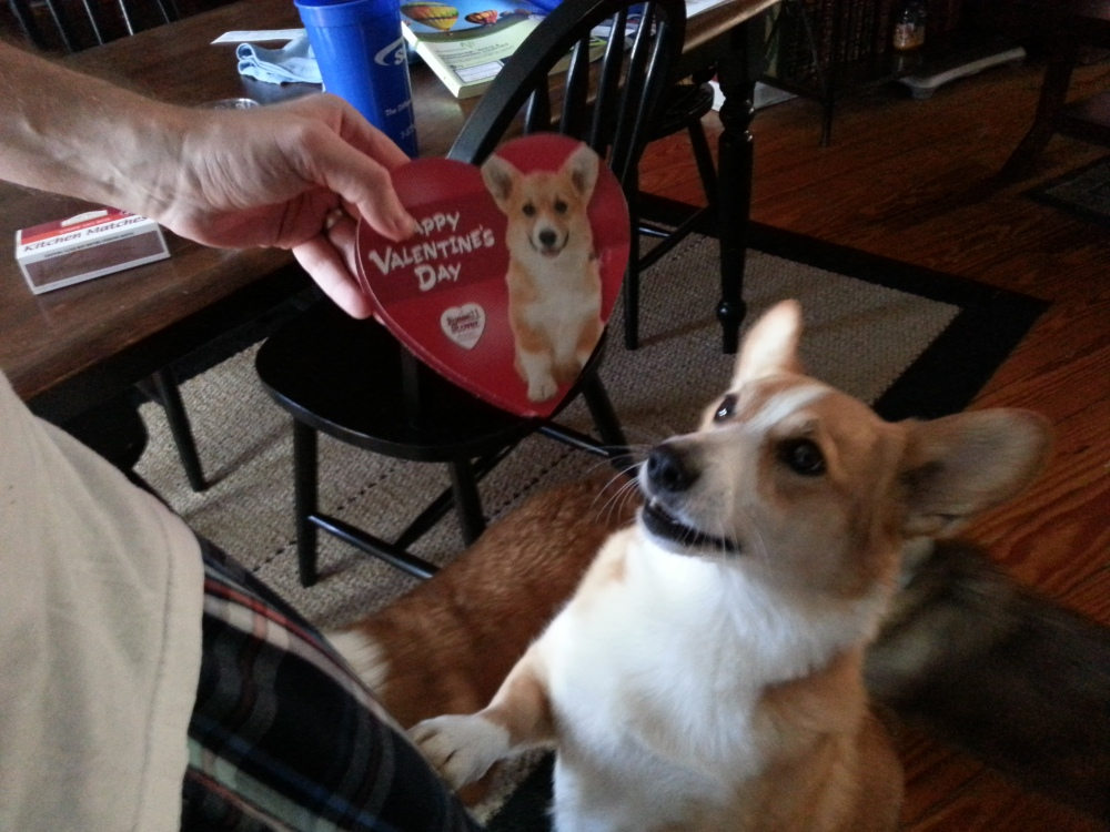 Corgis are love, even Russell Stover knows this.