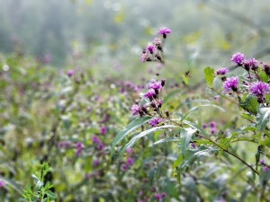 Purple flowers with blurred background