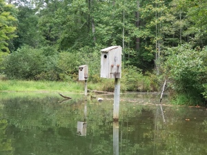 A Couple of the many waterbird houses found around Lake Russell